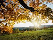 Con el otoño llega el sentimiento por un lado de soltar… aquellas hojas . autumn leaves