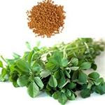 Fenugreek or fenugreek natural diabetes drug
