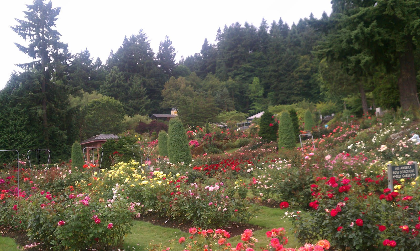 California and oregon summer 2012 portland international test rose garden for Portland international rose test garden