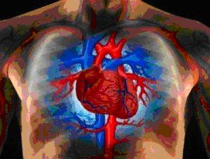 Việc lạm dụng các hợp chất β-agonist có thể gây ra các bệnh về tim mạch.