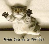 CAT VELCRO!
