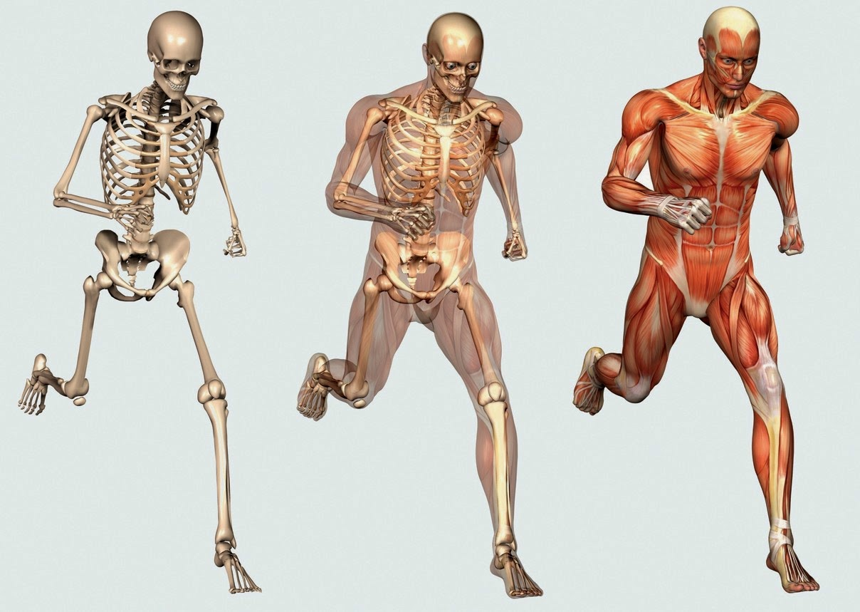 Healthy Food For Bones And Muscles