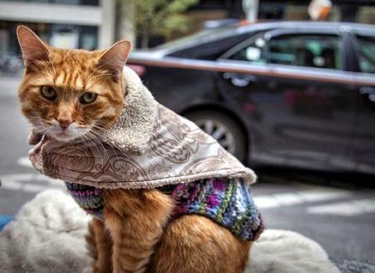 mclovin miracle cat toronto