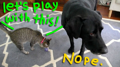 cat-dog-play-01