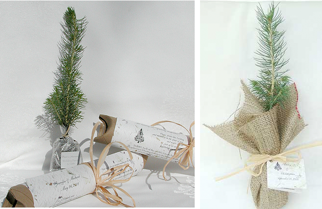 plantable Christmas trees Photos with thanks to grey likes weddingcom