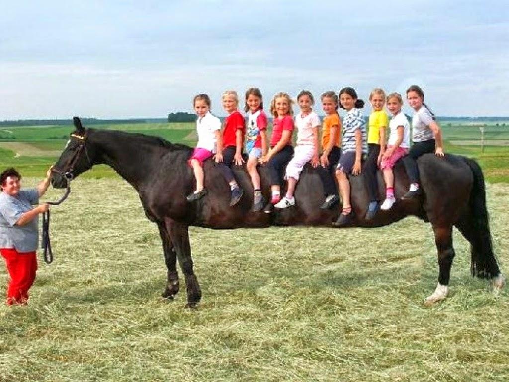 Best Wallpaper Horse