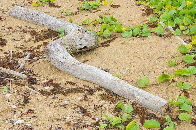 driftwood, beach