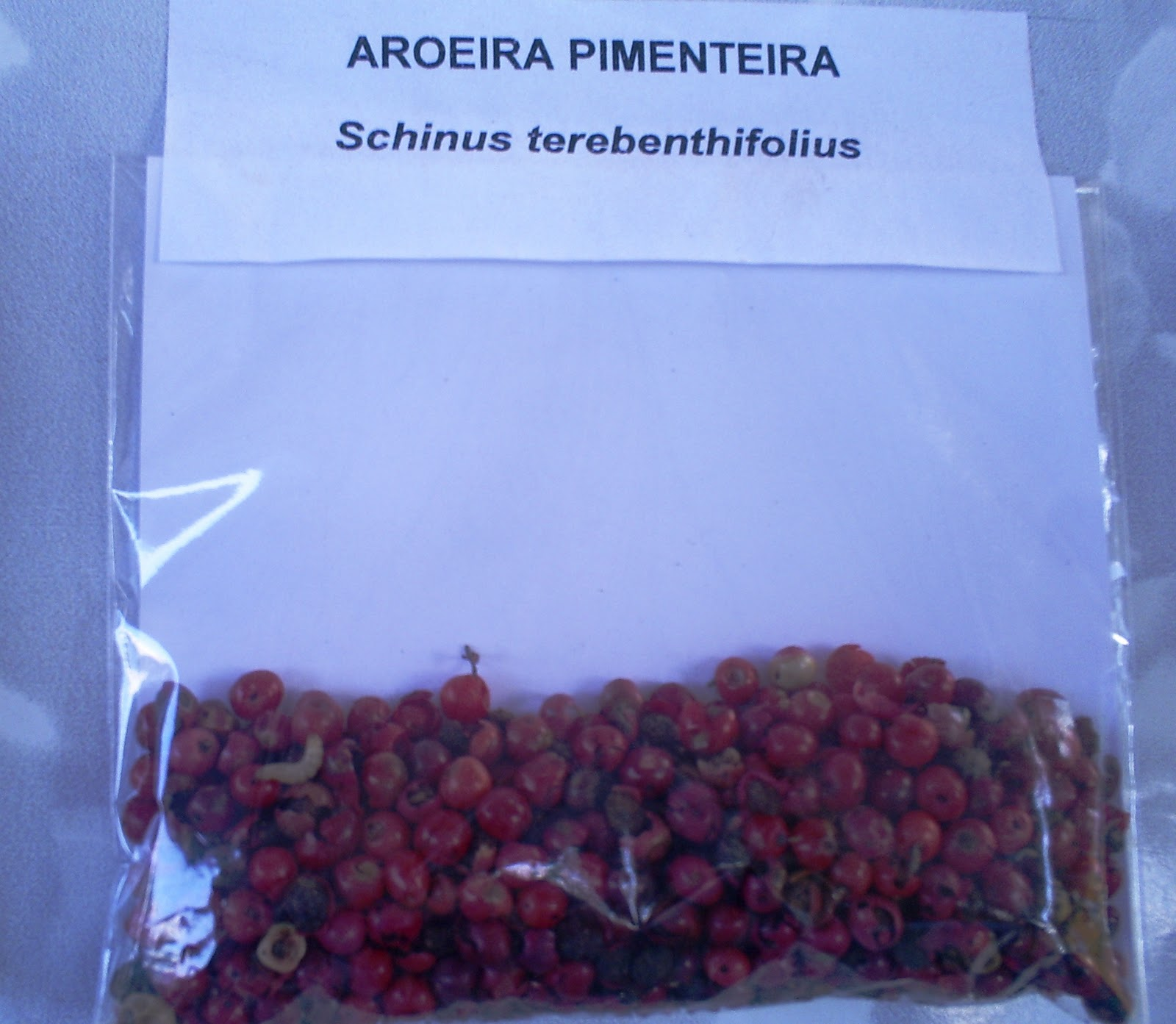 Projeto Usina: Aroeira Pimenteira #0C47BF 1600 1393