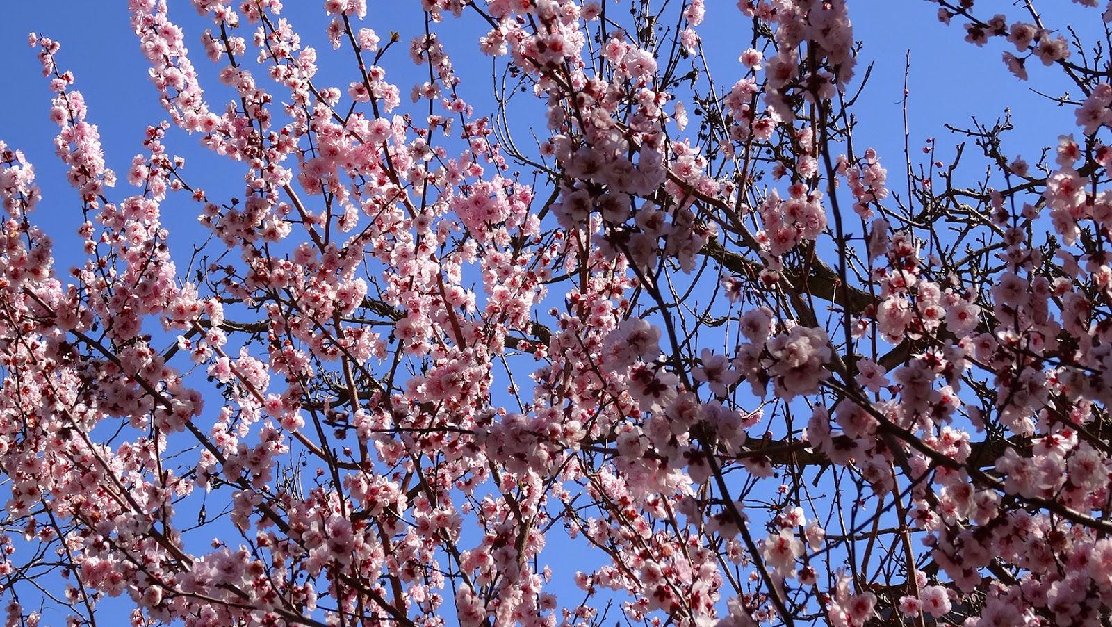 melbourne fresh daily melbourne street trees 86 spring blossom
