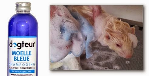 Shampooing Dogteur Moelle Bleue
