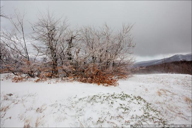 Снег и еще не полностью опавшие листья. Очень люблю такие картины