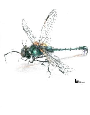 dessin libellule (crayons de couleur)
