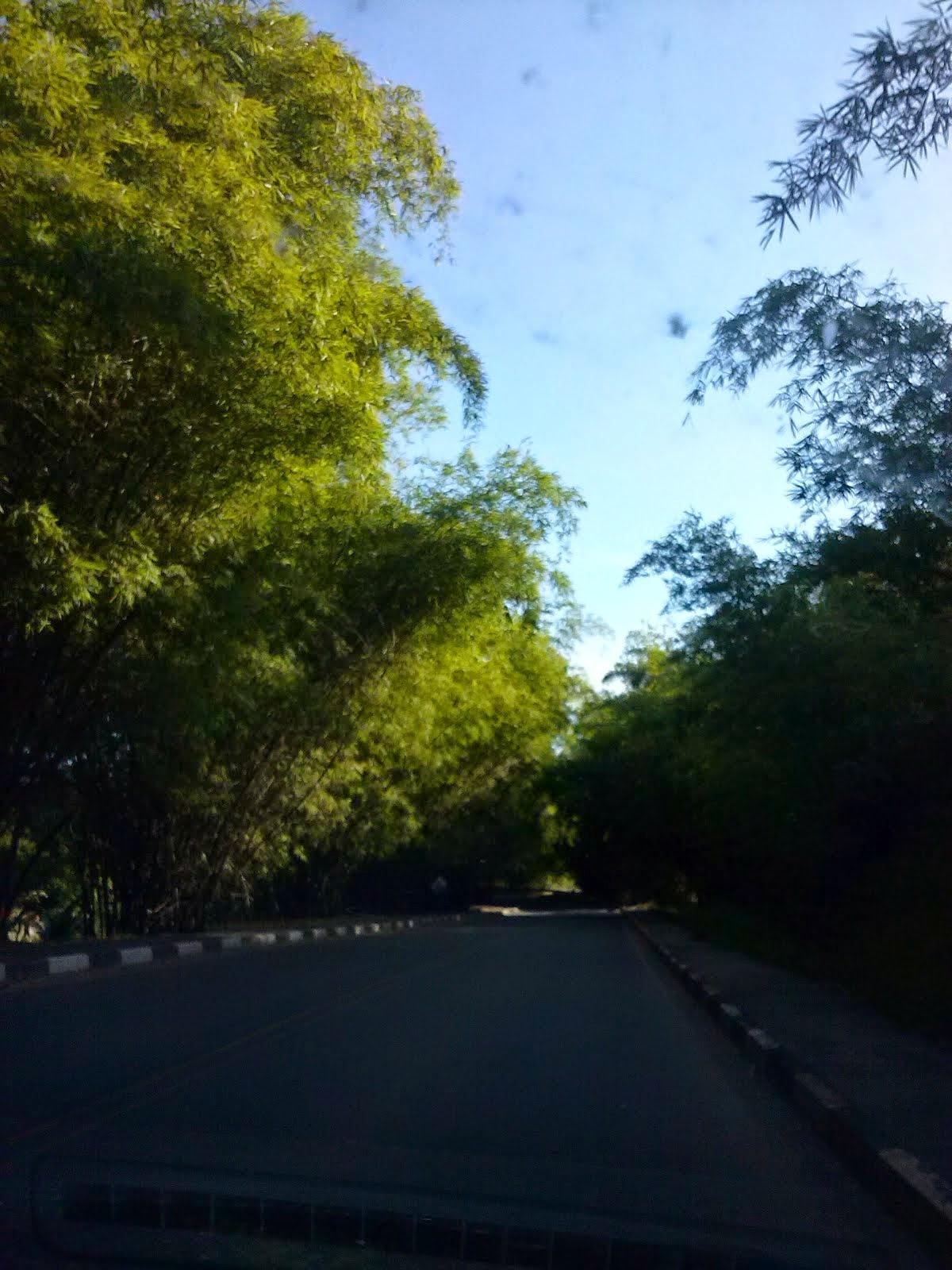 Verde é Vida