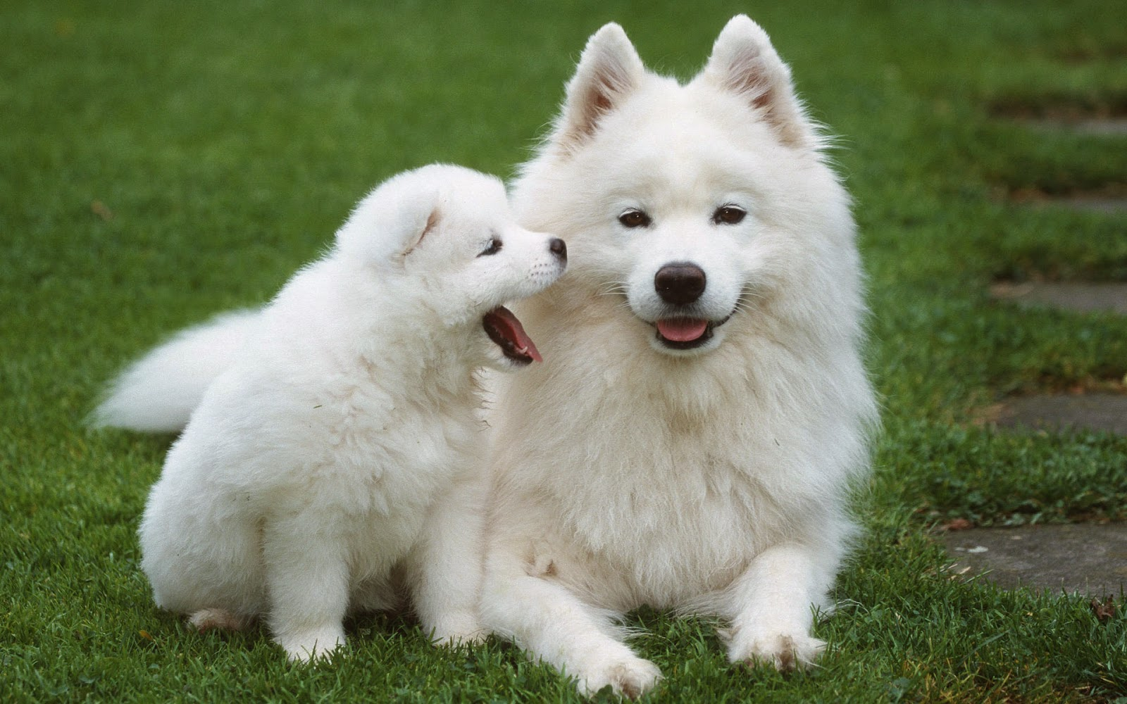 Dogs And Puppies Wallpaper Best Wallpaper:...
