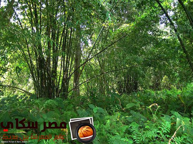 شاهد أغرب المعلومات عن الأشجار