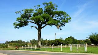 ALAGOAS: IMA comemora Dia da Árvore com oficina de orquídea