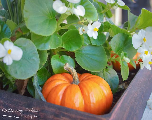 Autumn Decor | Whispering Whims