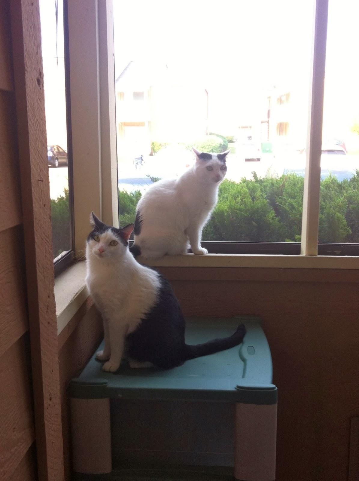 Petsmart Cat Adoptions Costa Mesa