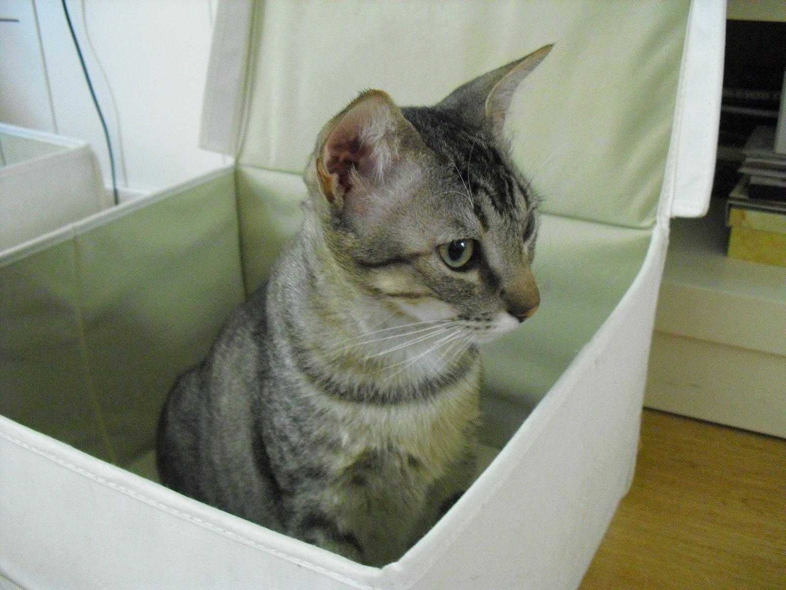 Soy un gato: Castración gatos macho