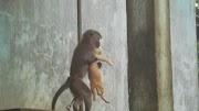 Pelajaran dari Monyet dan Kucing