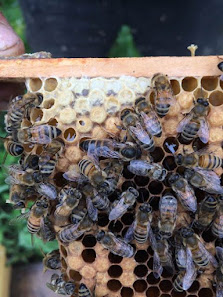 .Beekeeping Photos