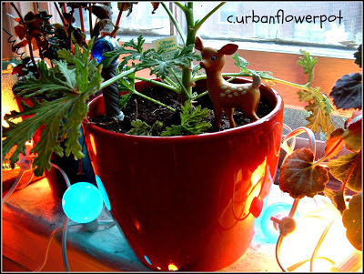 container gardening, thrift store planting, windowsill garden, indoor planting