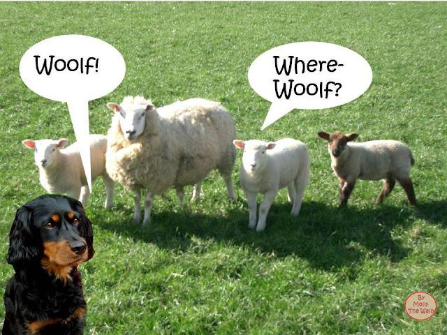 Molly The Wally & Sheep!