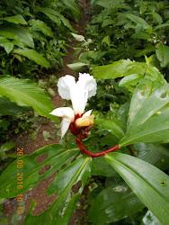 Beautiful seasonal Monsoon flowers.