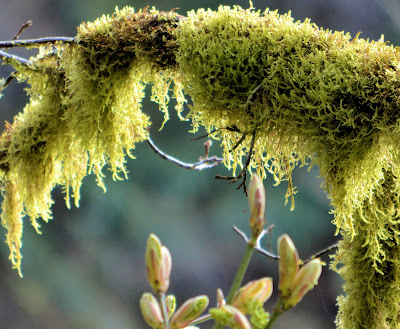 photo of moss by Nancy Zavada