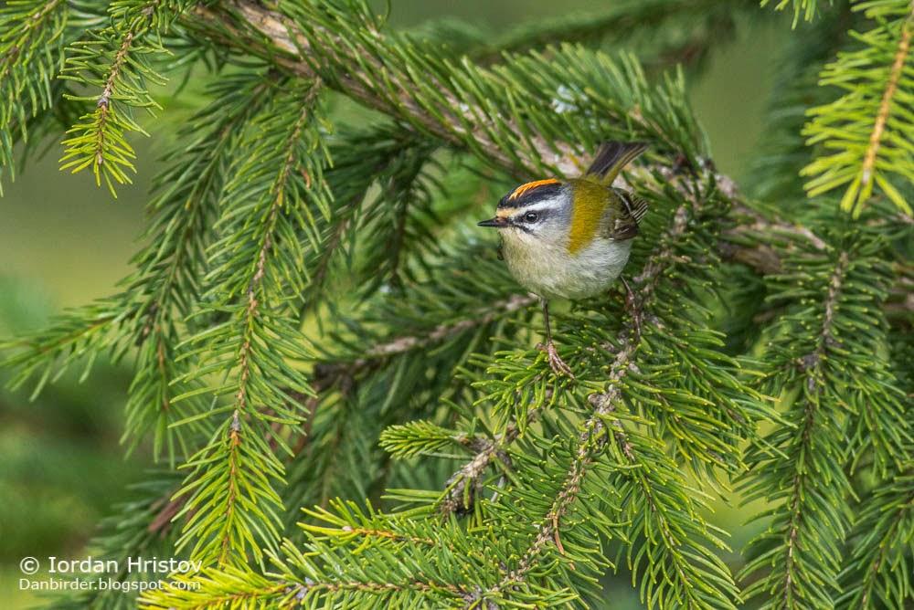 bird photography in Bulgaria
