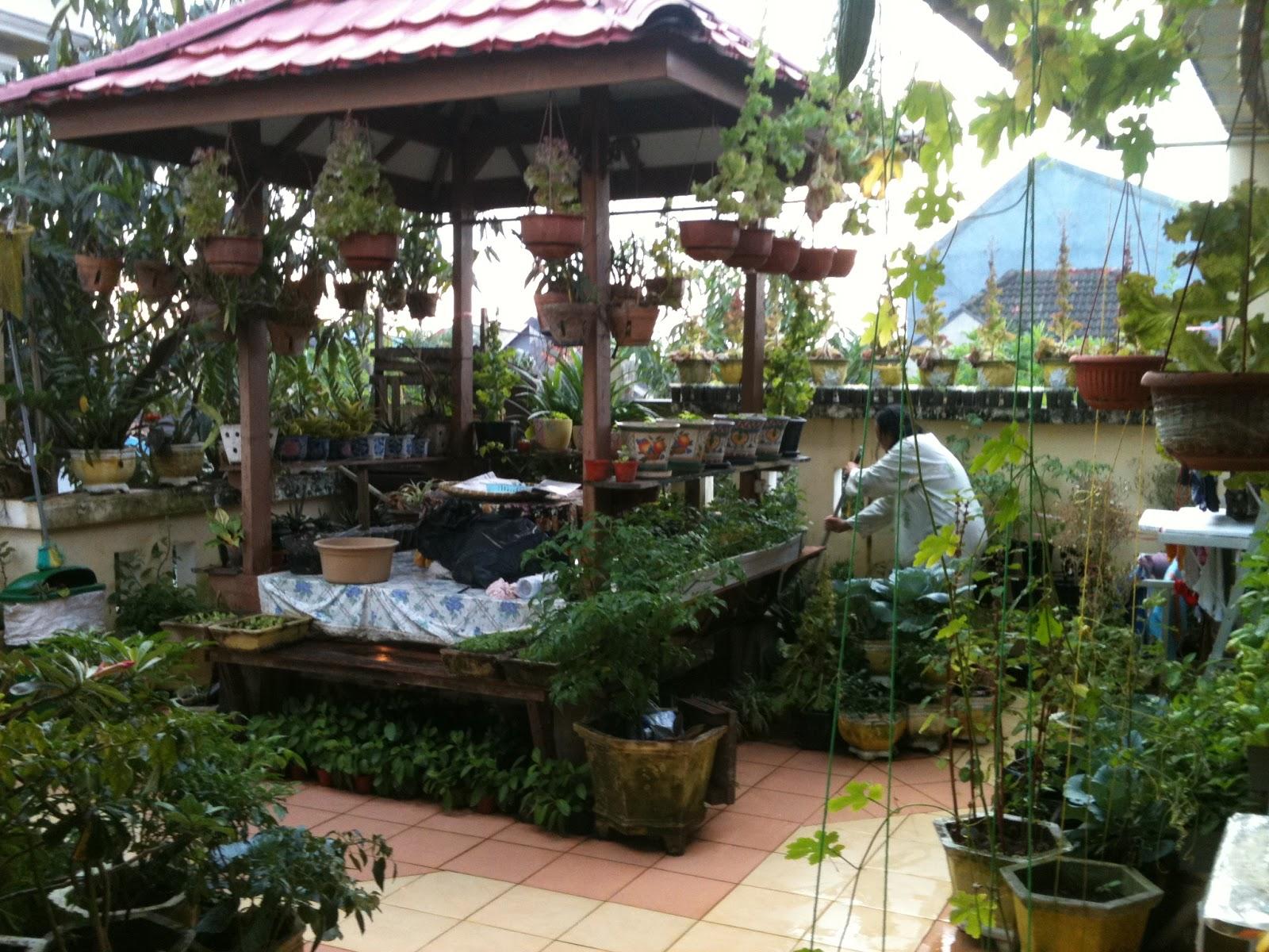 pekarangan lahan sempit taman teras atap rumah