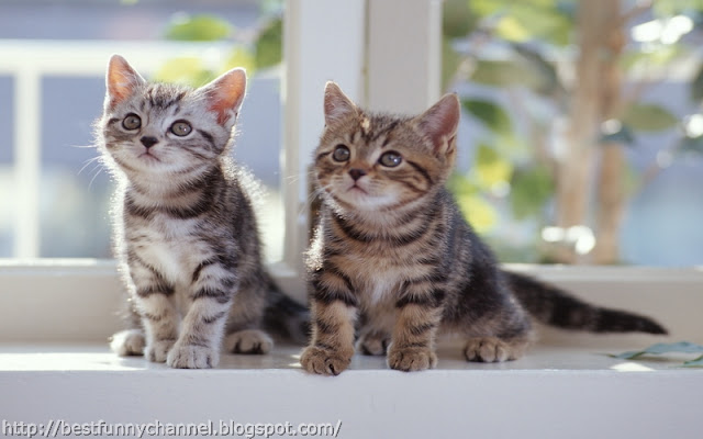 Two nice kittens.
