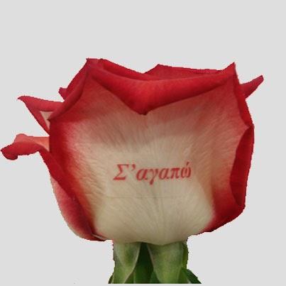 τυπωμένα τριαντάφυλλα ανθεμιο flowers