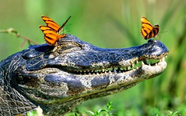 Maravillosas fotografías de animales