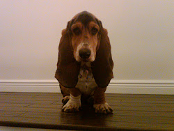 Martha the Basset Hound