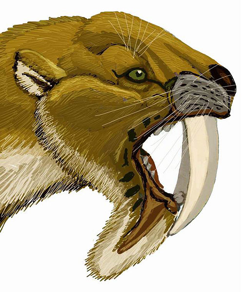 The Natural World Smilodon Vs Thylacosmilus The Saber