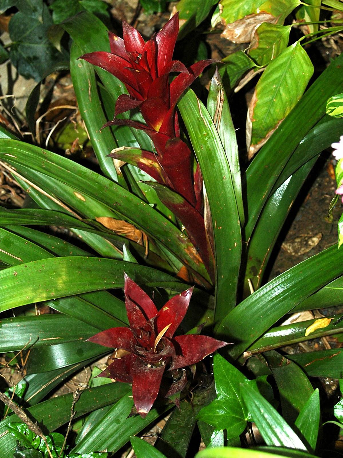 Imagenes de plantas con flores y sus nombres - Plantas de jardin nombres ...
