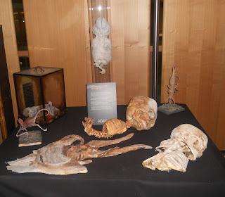 Varios cuerpos de extraterrestres. Sorprendente la variedad en la Exposición de Cuarto Milenio.