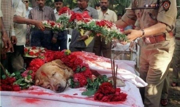 Funeral dog who saved thousands of lives during the terrorist attacks in Mumbai in 1993, found 3 tons of explosives.