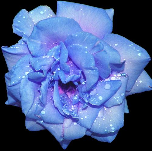 transparent flowersTransparent Flowers Tumblr Blue