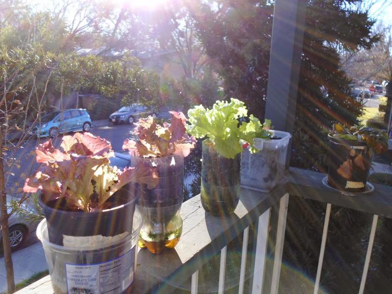 Sun shines on balcony