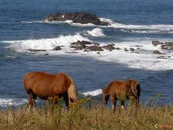 ... les chevaux et la Bretagne