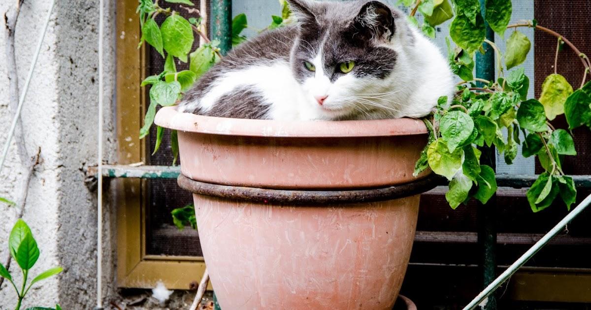 Cat Plant...?!