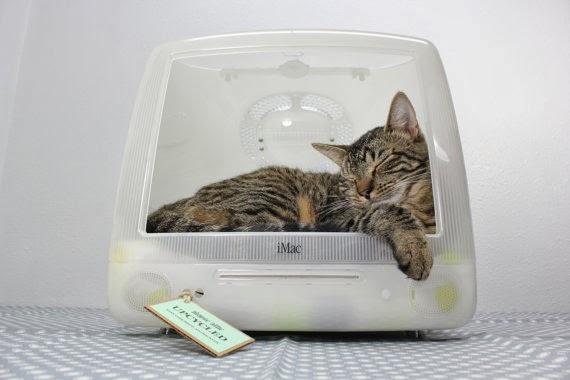 cucce per il gatto fai da te (non il gatto, la cuccia) - plus deco