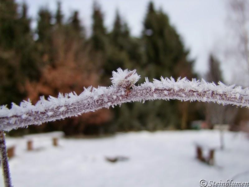 Zweig mit Eiskristallen