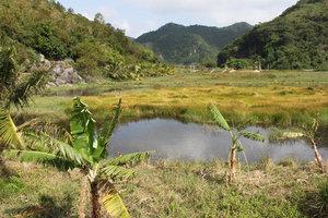 Landscape on Cát Bà island
