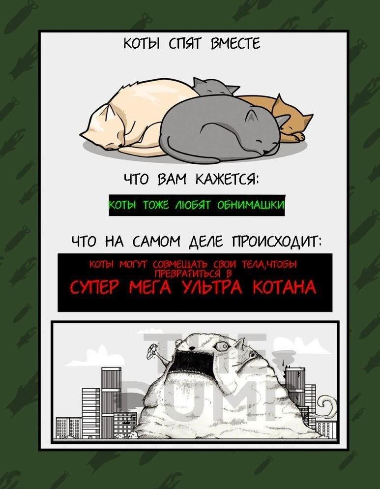 Что делают коты для захвата мира
