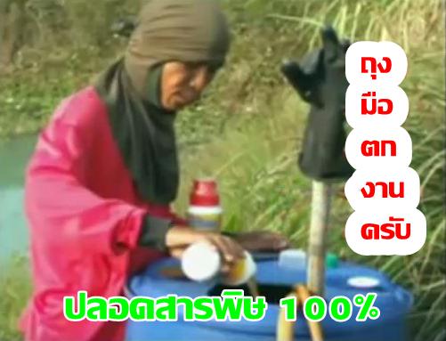 ปลอดสารพิษ 100%