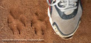 Claw Marks - Man vs Animal - Masinagudi Forest
