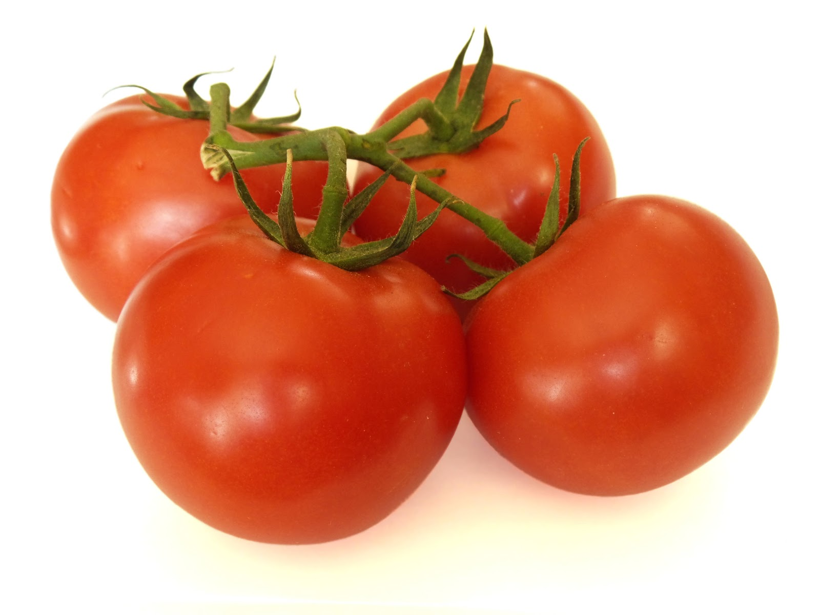 Tomatoes on vine with white background